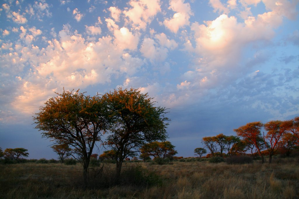 Acacia erioloba savannah in the former Vaalbos National Park