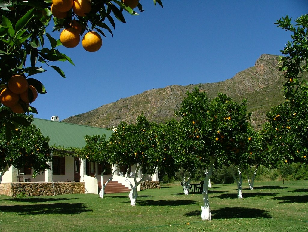 De Oude Boord Cottage - Set in an organic orange orchard next to a mountain stream on the Boshkloof Estate 7km outside of Citrusdal