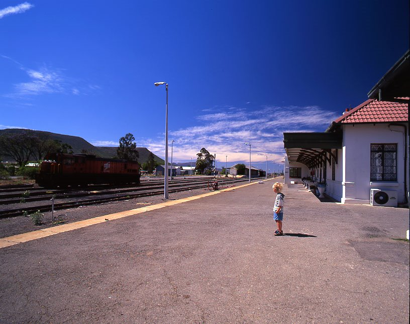 Robin on Graaff-Reinet station