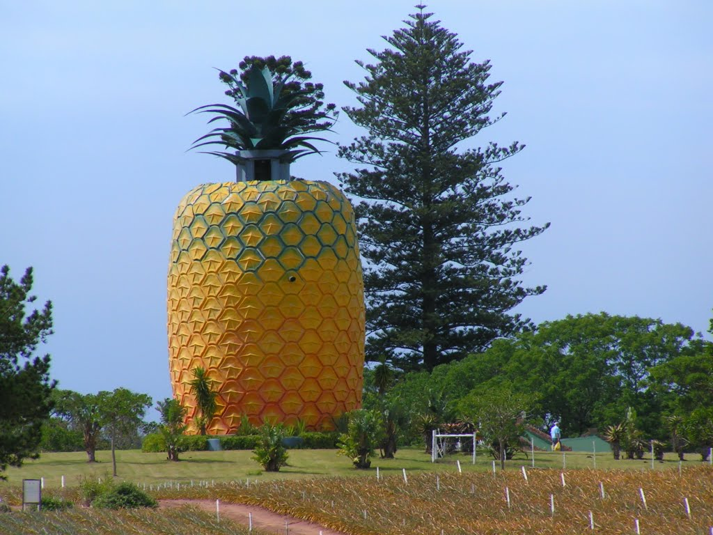 The biggest pineapple in the world