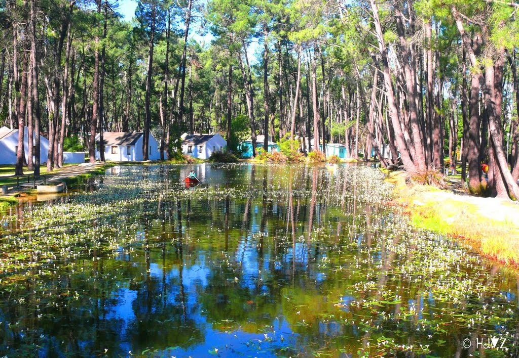 """Reflection Pool"" Pine Forest Campsite Ceres"