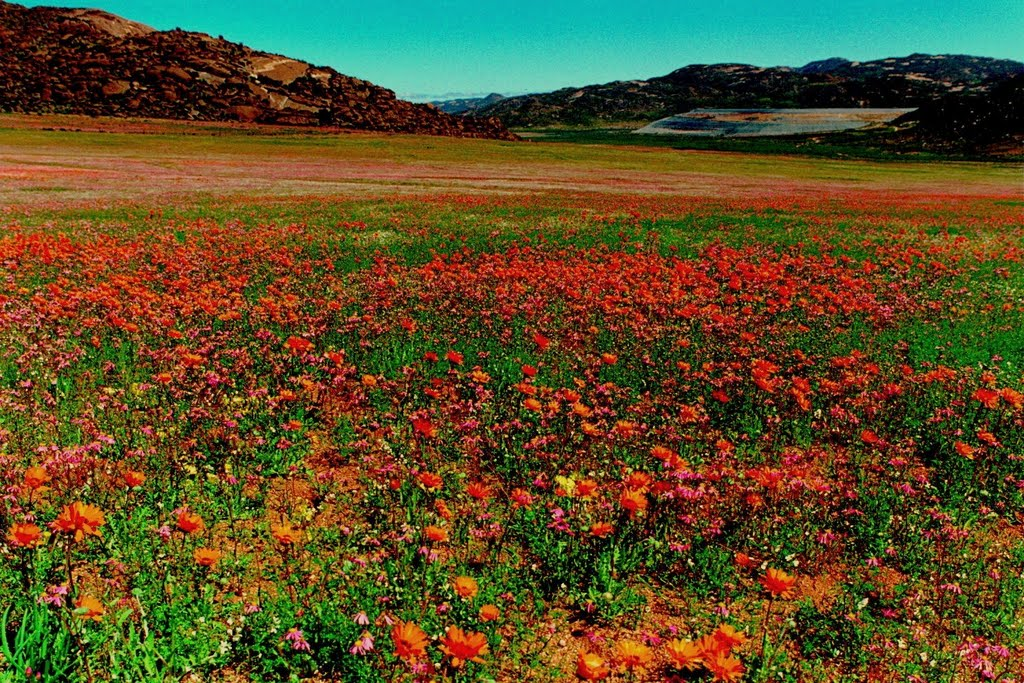 South Africa Goegap Nature Reserve (Namaqualand)