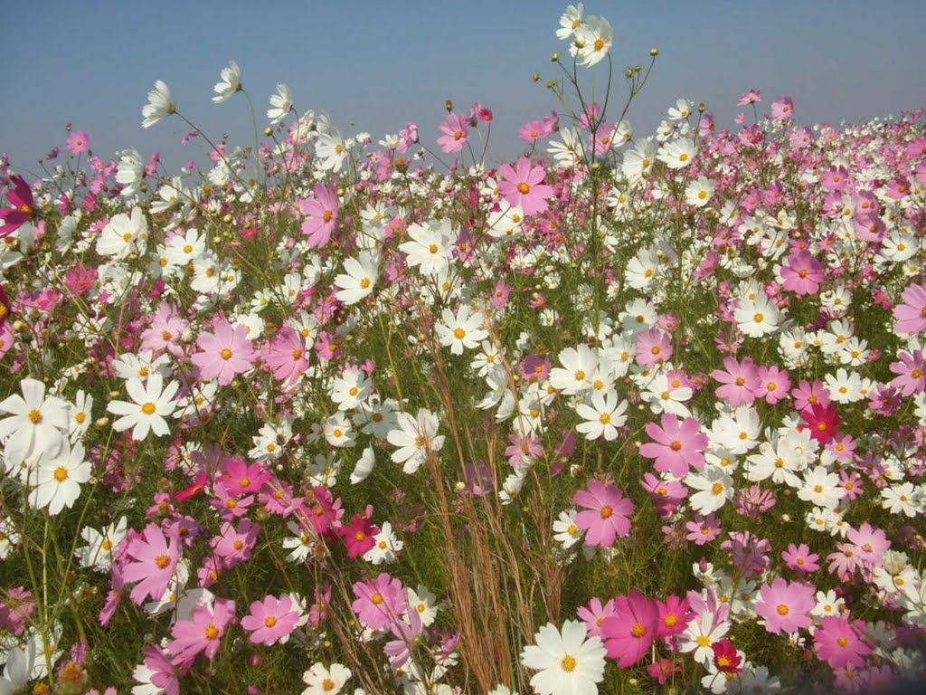 Wild Flowers in Western Transvaal, South Africa